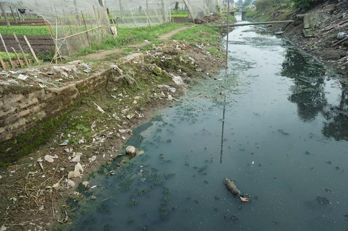 Ô nhiễm nguồn nước là gì?